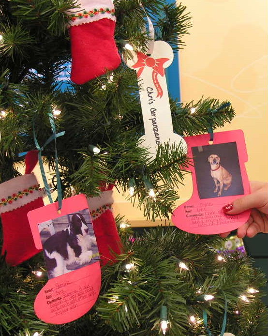 """Our Angel Tree History<br><br>  <span style=""""font-size: 22px; font-weight: 500;"""">Angel Tree is our annual fundraiser that began 20 years ago. Since the start of the program, we have raised over $100K toward organizations that promote the welfare of animals and celebrate the human and animal bond.<br><br> 100% of the proceeds collected for Angel Tree are given to non-profit organizations enabling them to continue the work that they do.<br><br> Alongside our monetary donations, at each center, we collect wish list items including food, toys, and pet care products for local shelters and adoption partners.<br><br> Our 2020 Angel Tree Fundraiser benefitted NEADS World Class Service Dogs. Learn more about NEADS on this page, or visit their website at: <a href=""""https://neads.org"""" target=""""blank"""">NEADS.org</a><br><br> We'll be back in November 2021 with our Angel Tree program and a newly chosen, pet-serving, nonprofit organization to raise money for. If you're not yet on our mailing list, be sure to subscribe with your name and email address at the bottom of our website.</span>"""