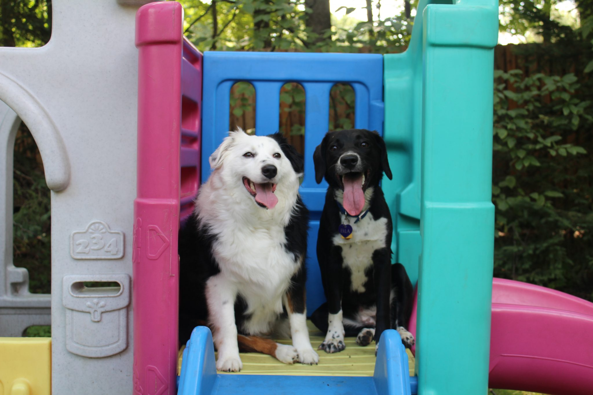First day of Doggy Day Camp FREE for new campers
