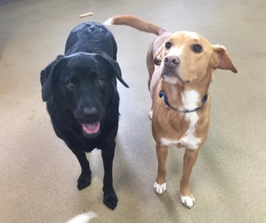 two dogs best friends day camp buddies