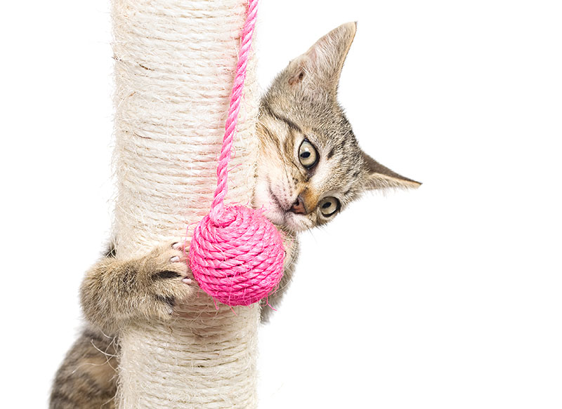 cat playing on rope wrapped pole with rope toy