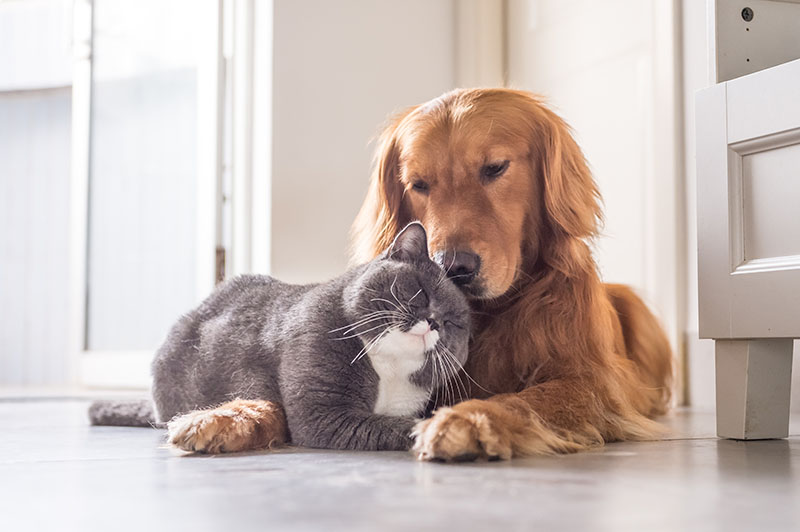 adopted dog snuggling with cat