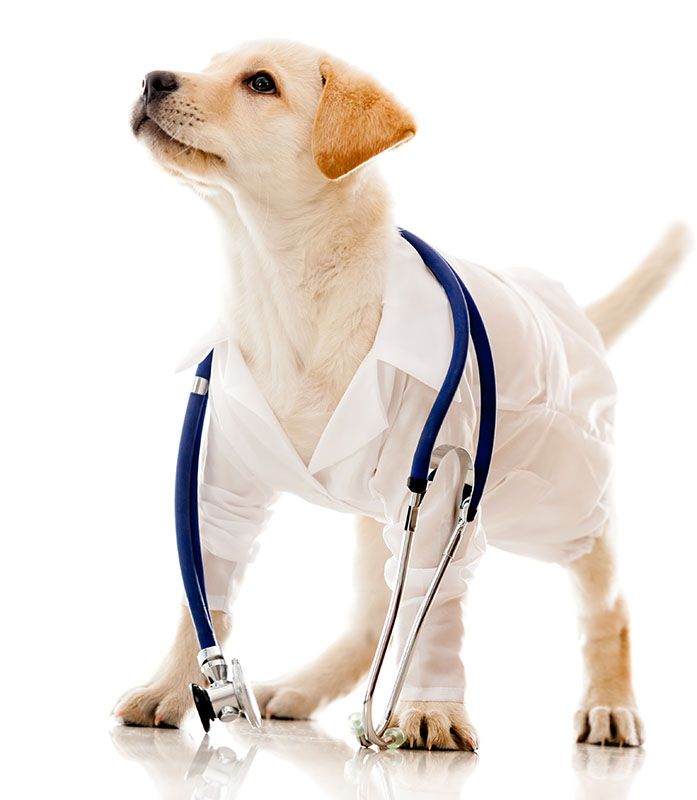 dog dressed as vet with white coat and stethoscope