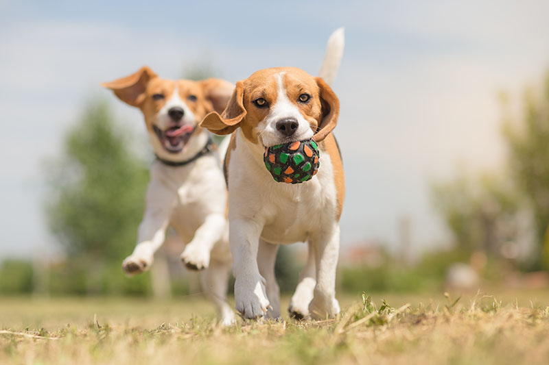 dogs running and playing outside