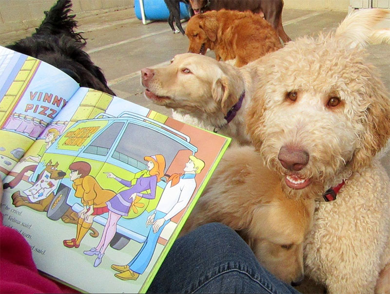 dog story time at doggy day care