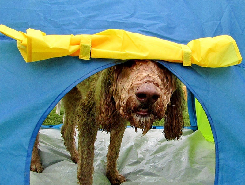 dog playing in tent at day care