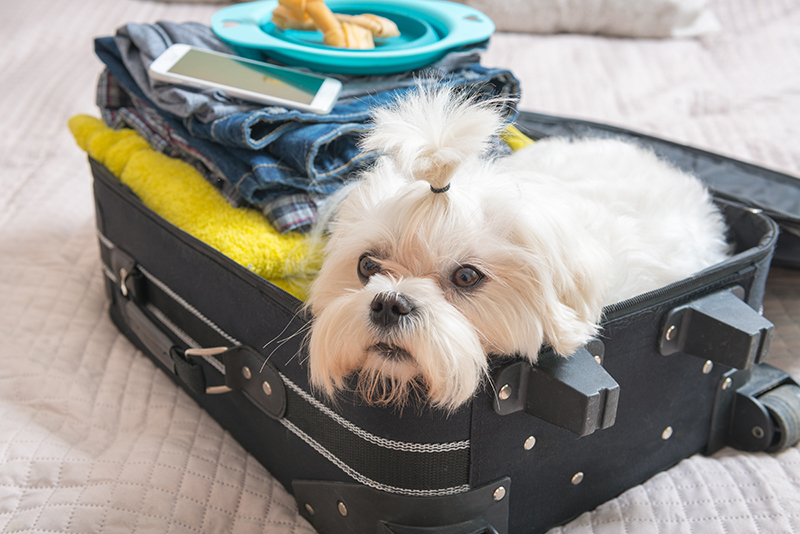 small white fluffy dog packed in suitcase