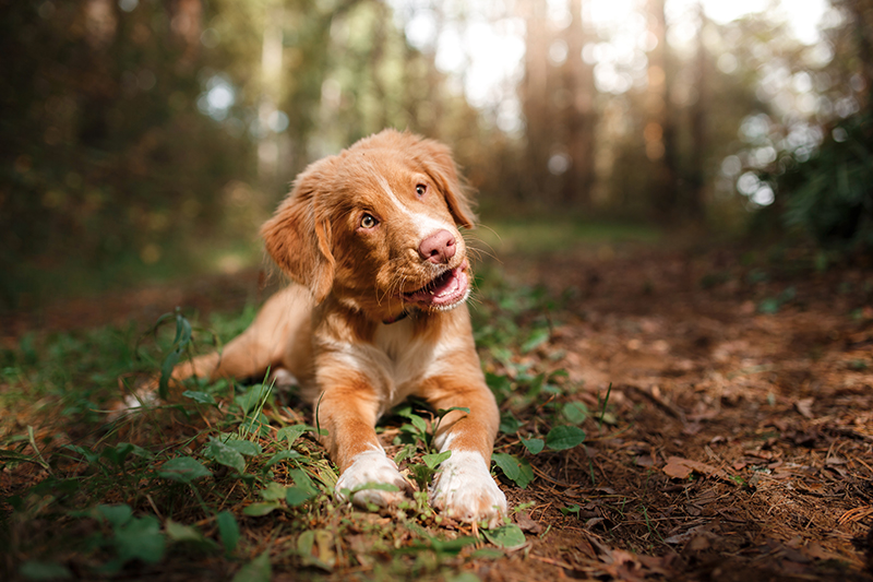 cute dog laying on trail in forest