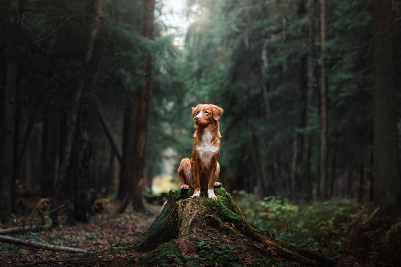 dog sitting on mound on trail in forest