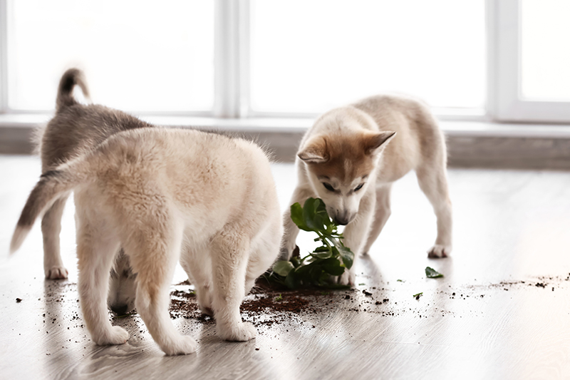 two dogs eating knocked over plant