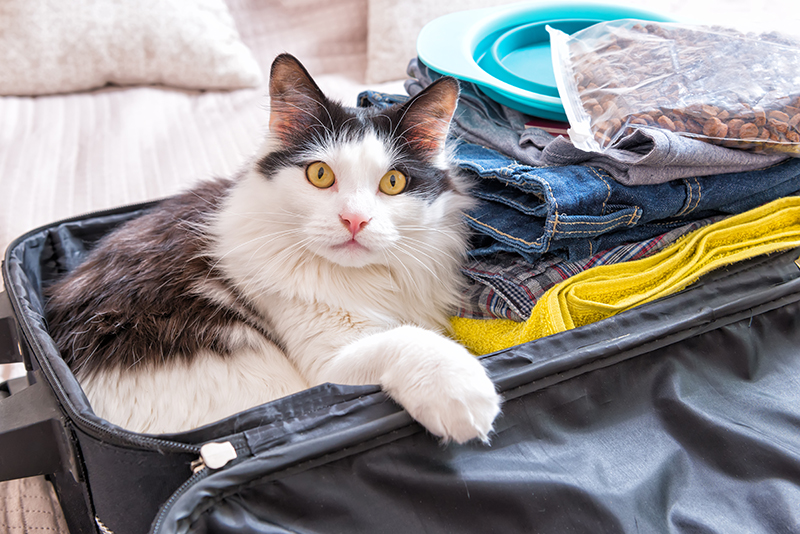 cat packed in suitcase