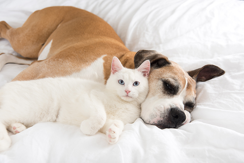 dog and cat resting on comforter