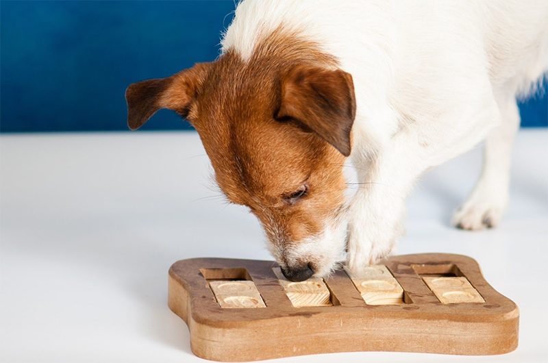 dog playing fun brain game