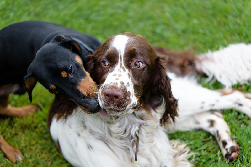 two dogs hanging out in grass
