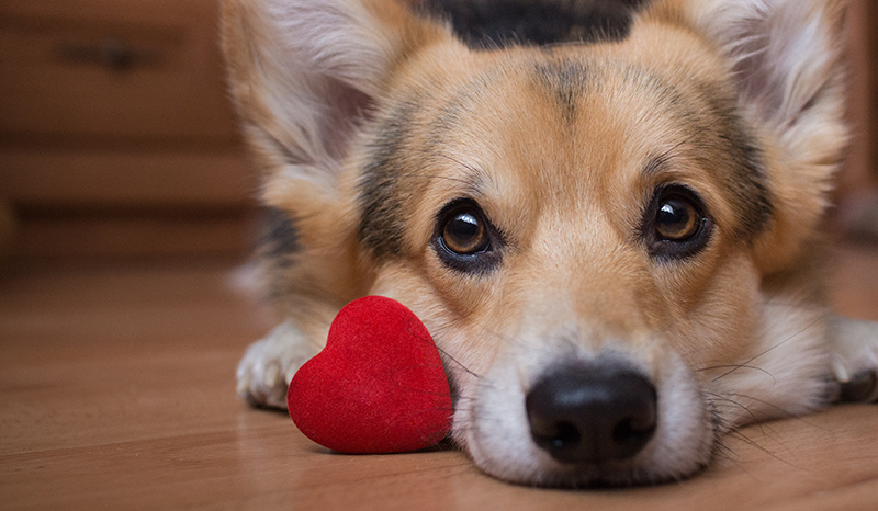 dog on floor with heart toy