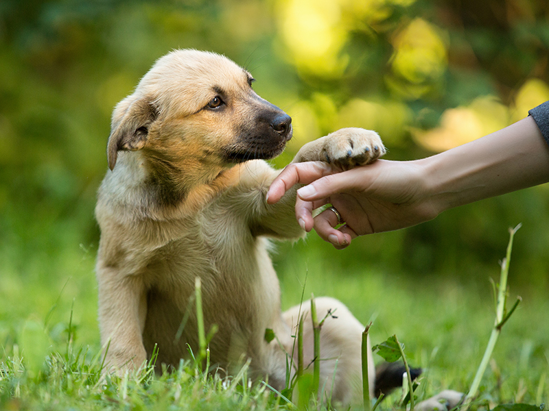 dog playing with human in grass