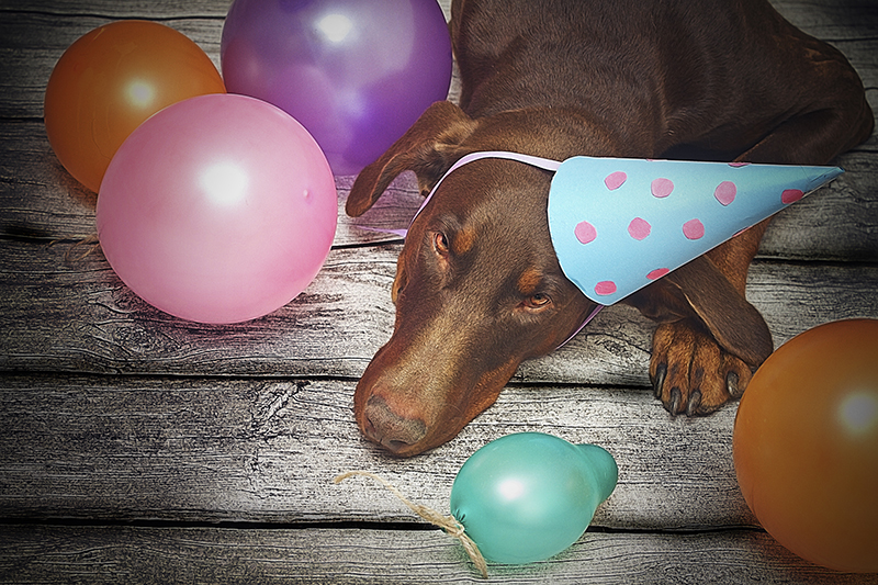 dog birthday party balloons party hat