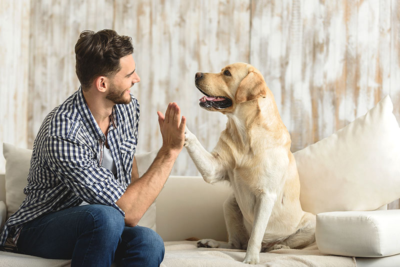 man dog sofa high five