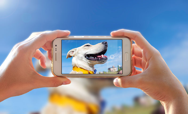 taking dog's photo with phone camera
