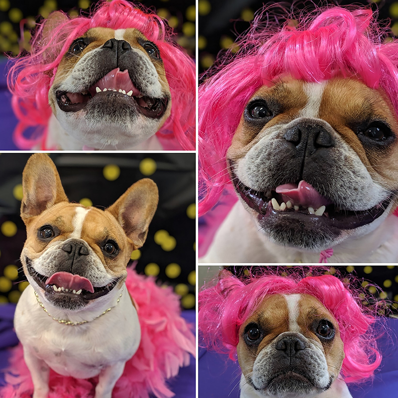 dog pink wig funny photo collage
