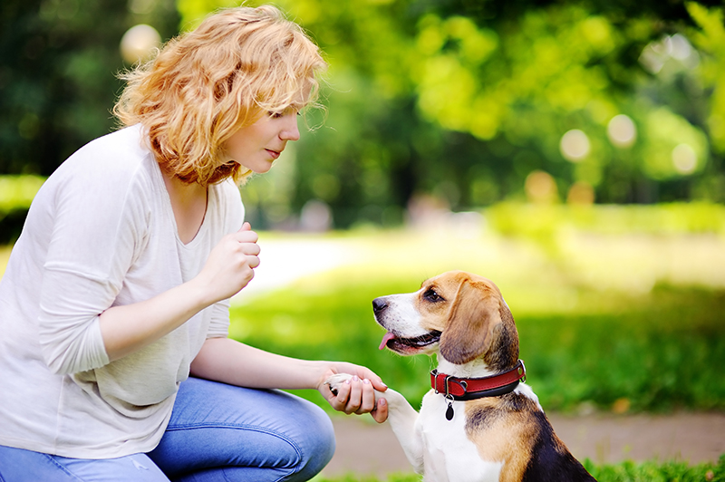 dog giving paw to woman