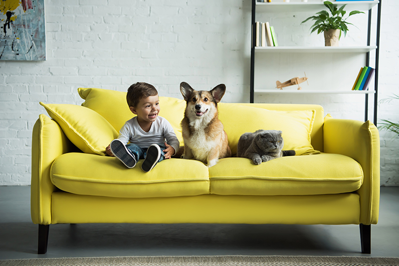 boy with dog on yellow sofa