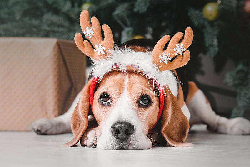 dog holidays deer antlers