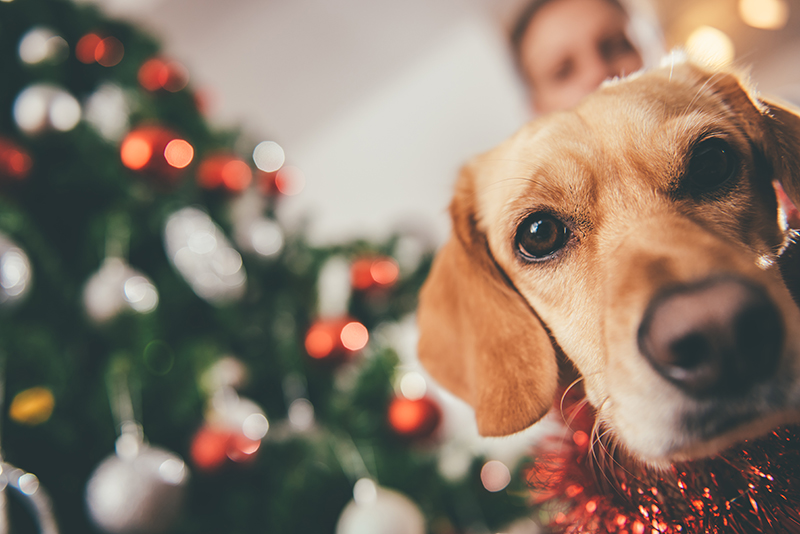 dog pet parent holidays