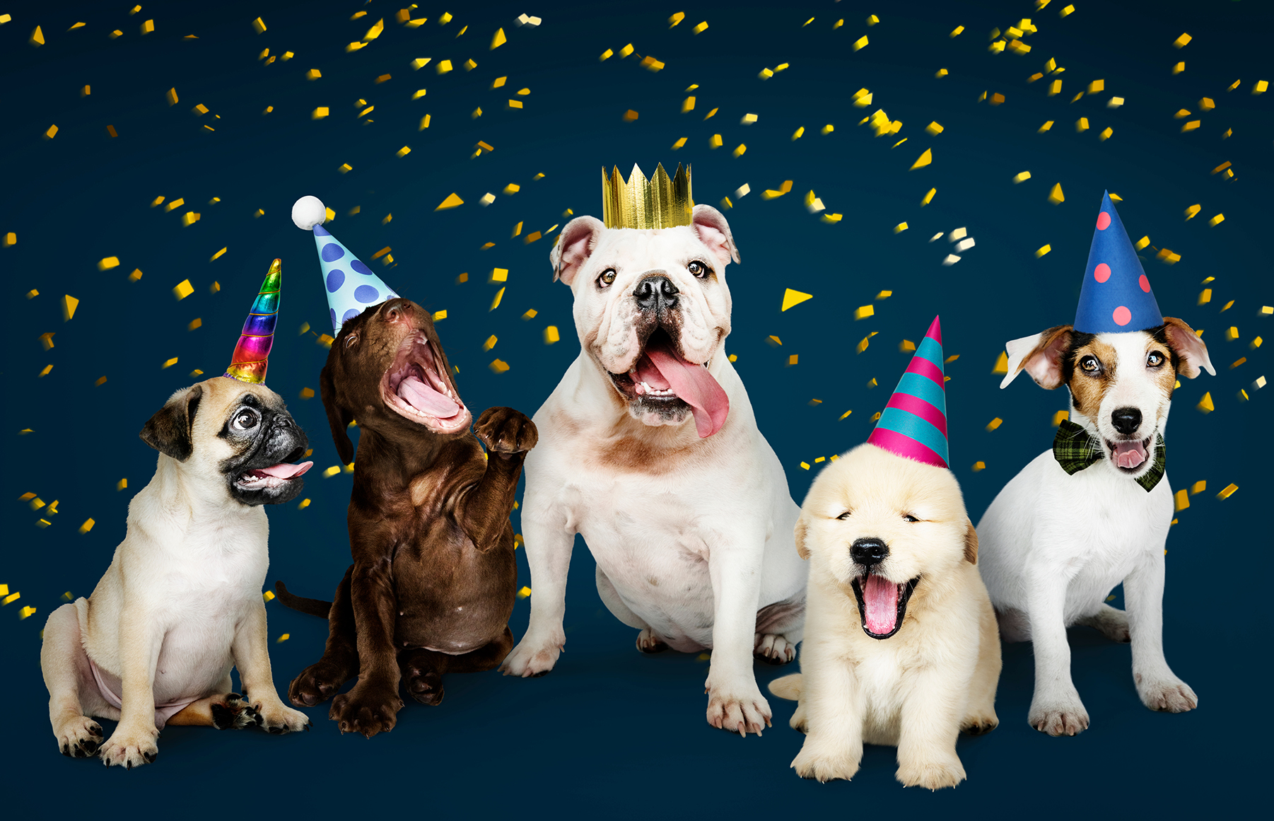 """Doggy Day Camp New Year Party - Sat, 1/9<br><br>  <span style=""""font-size: 22px; font-weight: 500;"""">It is time to celebrate the beginning of 2021 during our Doggy Day Camp New Year Party. Bring your party hats, dancing shoes, and get ready to play all day! Serving dog-friendly ice cream for $3 as we watch the BOUNCY ball drop together.<br><br> Call your local Best Friends Pet Hotel to find out more or reserve your spot today!</span>"""