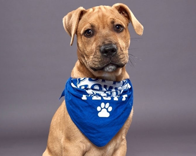 """<br><br><br><br>Puppy Bowl Party-Ready Grooming Special - Sat, 1/23 - Sun, 2/7<br><br>  <span style=""""font-size: 22px; font-weight: 500;"""">Get $10 off a $50 grooming appointment, at Best Friends Pet Hotel, if rendered any day between Saturday, January 23rd - Sunday, February 7th. (Offer NOT available in Florida location.)<br><br> Plus, all groomed and pampered fur kids go home with an official Animal Planet Puppy Bowl XVII """"Team Ruff"""" or """"Team Fluff"""" bandana to celebrate the big game!<br><br> <a href=""""https://bestfriendspetcare.com/grooming"""" target=""""blank"""">Book online</a> or call your local center to make an appointment.<br> For $10 off, use coupon code: <strong>BFPB21GRM</span>"""