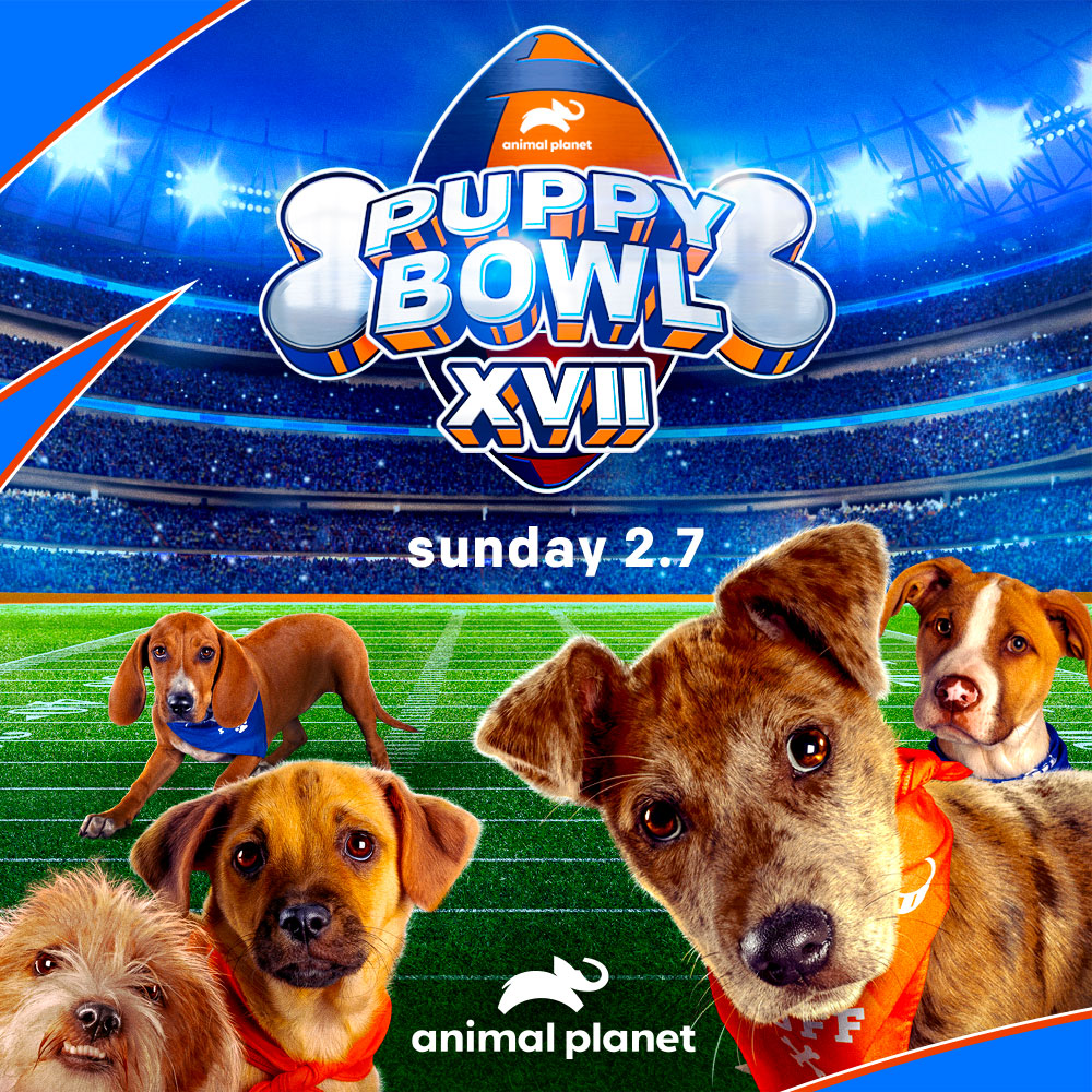 "<a name=""best-fan""></a><br><br><br>We tuned into Puppy Bowl XVII on Animal Planet, and Held Our Best Fan Photo Contest!<br><br><span style=""font-size: 22px; font-weight: 500;"">We're proud to have partnered with Animal Planet for another year's Puppy Bowl, and we invited everyone to tune-in to Puppy Bowl XVII, which aired on Sunday, February 7th at 2pm ET on Animal Planet.<br><br> We encouraged every pet family to cheer for Team Ruff or Team Fluff as the Puppy Bowl pups dodged defenders, leaped over competition, and ran for touchdowns. It was an exciting event!</span><br><br> <span style=""font-size: 28px; font-weight: bold;"">Our Puppy Bowl Best Fan Photo Contest!</span><br><br> <span style=""font-size: 22px; font-weight: 500;"">We asked everyone to take a great fan photo of their pup (or pups) watching or celebrating Puppy Bowl XVII and then to post their photo to Instagram with the hashtags <strong>#puppybowl</strong> and <strong>#bestfriendspethotel</strong><br><br> Three winners were chosen based on photo creativity, cuteness, humor, and likes. Winners receive Best Friends gift certificates and prize packs.<br><br> <strong>Our three Winners and Entrants are featured <a href=""https://bestfriendspetcare.dog/puppy-bowl-best-fan-2021"" target=""blank"">HERE</a>. :)</strong> </span>"