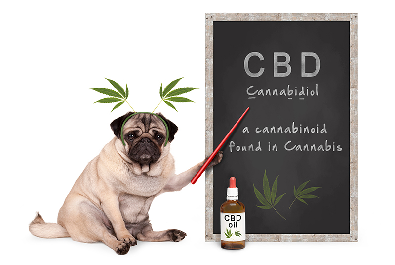 dog cbd education