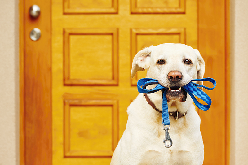 dog leash in mouth, ready for walk