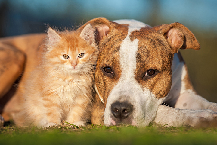 heartworm disease dog cat