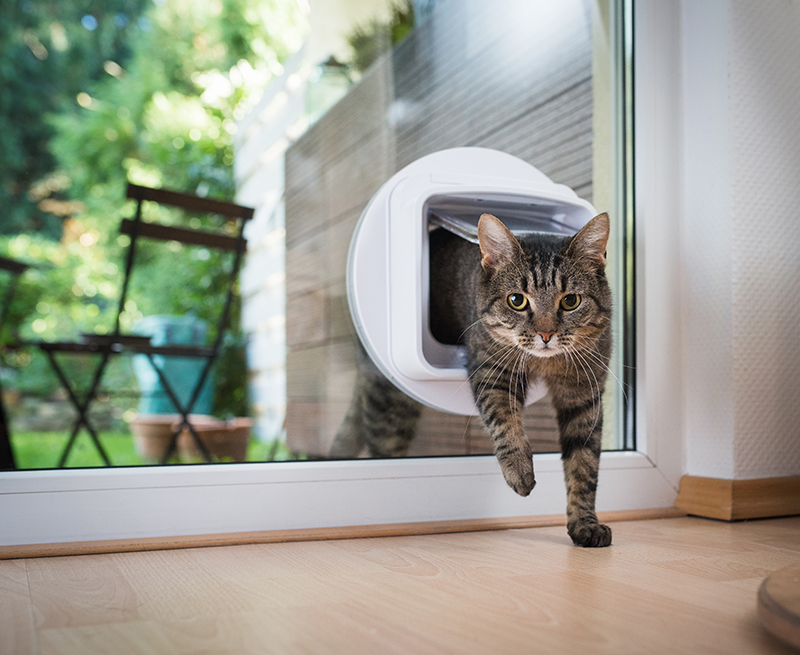 microchipping, cat, home